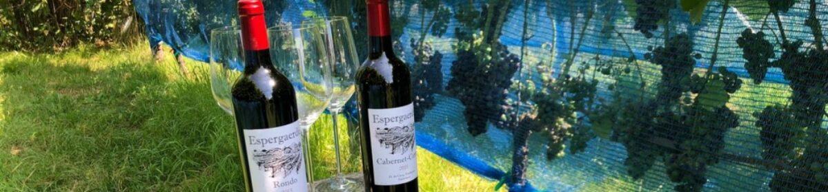 Wijngaard Espergaerde